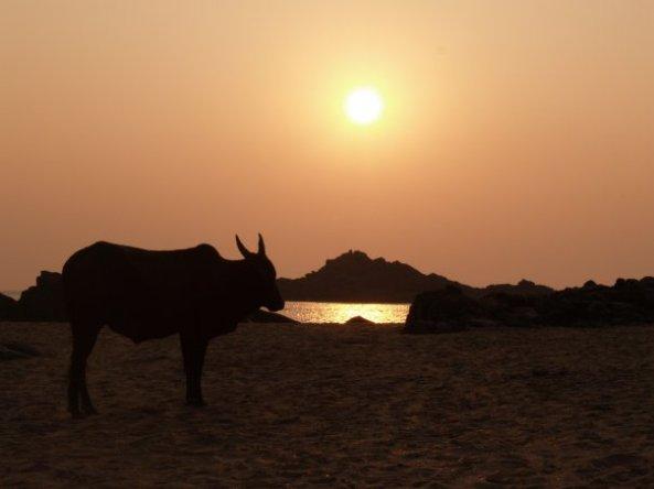 Intia 2008